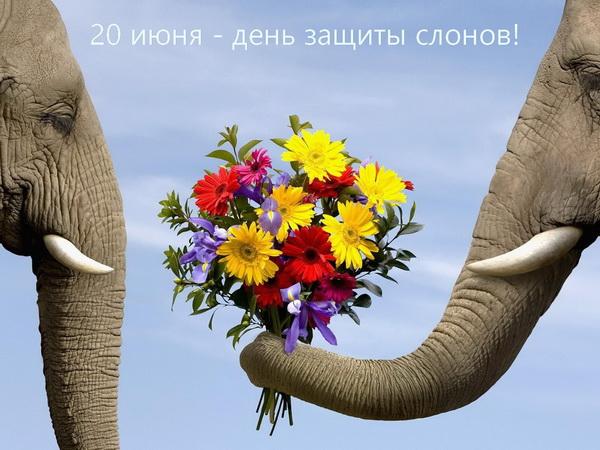С Днем защиты слонов!