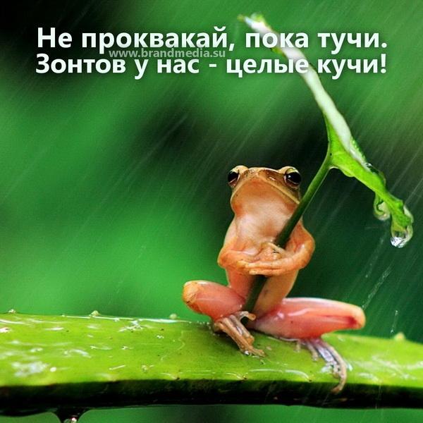 Оптом зонты с логотипом
